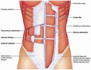 Picture of Abdominal Layers